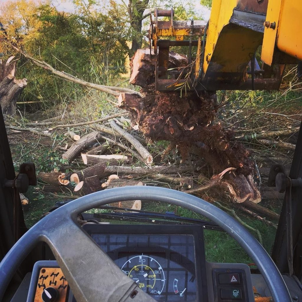 Clearing a collapsed old willow love my JCB 525 #jcb