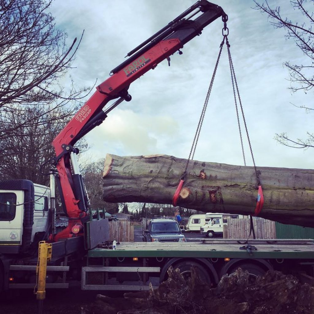 Scored a sweet beech trunk today thanks to @jamescantle and @farolltd for moving it. Have a great weekend everyone. #arblife