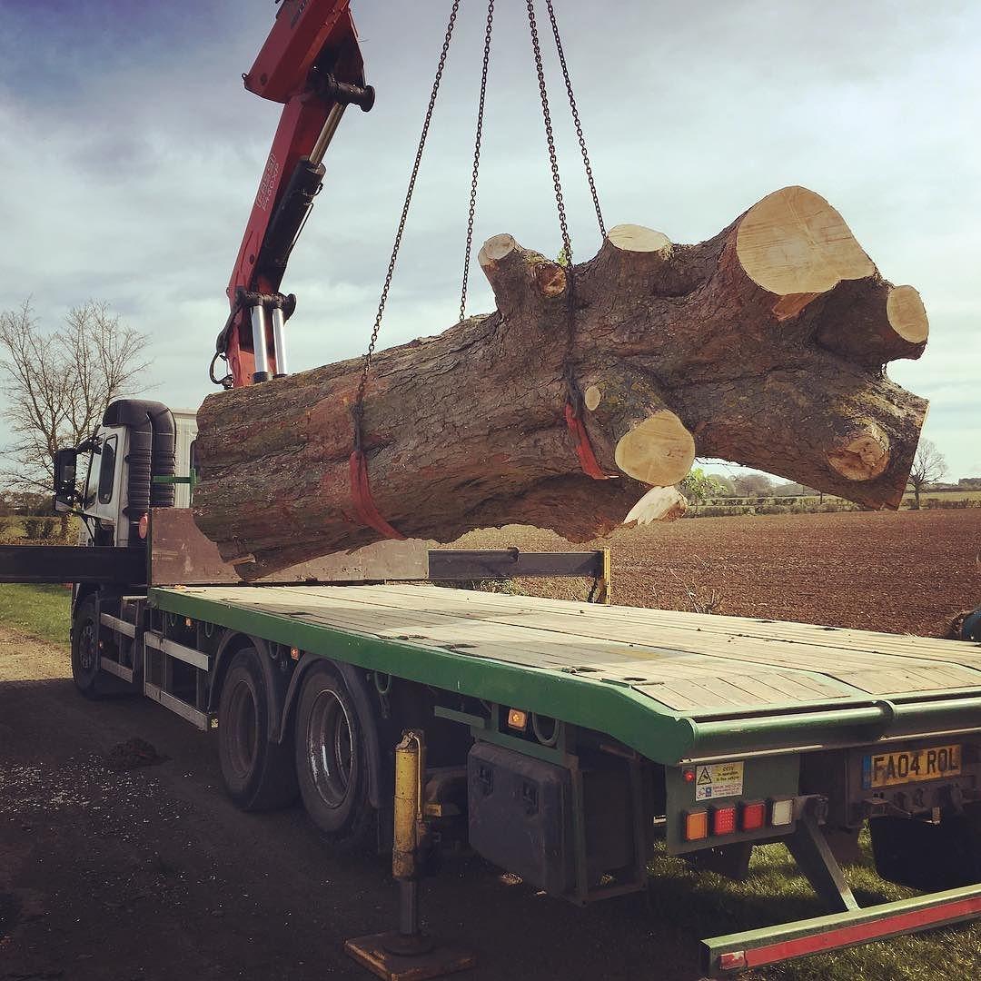 Scored a massive maple trunk last week, old field tree should have so stunning grain inside. #milling #liveedge #alaskanmill